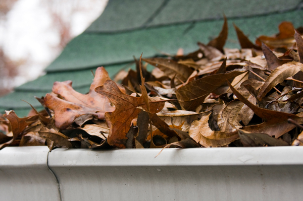 gutter full of leaves damage